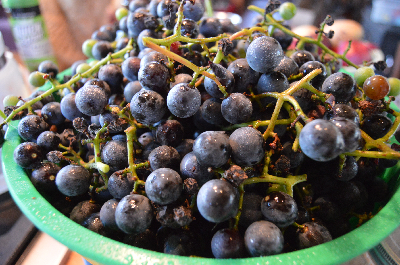 farm-grapes
